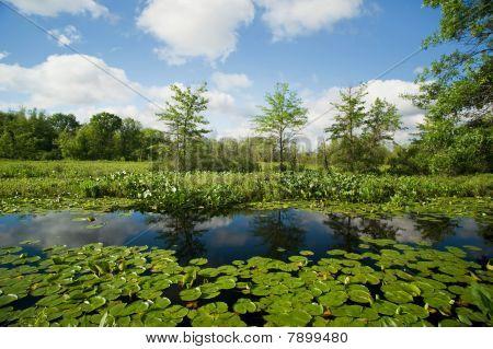 Reflections In Wetlands