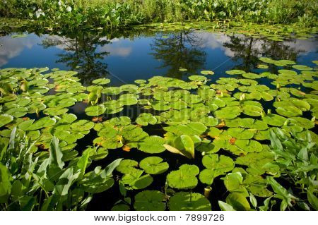 Reflection Of Sky In Swamp