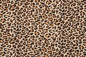 stock photo of leopard  - texture of fabric striped leopard for background - JPG