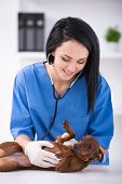 foto of veterinary clinic  - Young female doctor with a cute dog during examination by a veterinary clinic - JPG