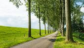 stock photo of dike  - Country road next to a dike and between rows of tall trees on a sunny day in summer - JPG
