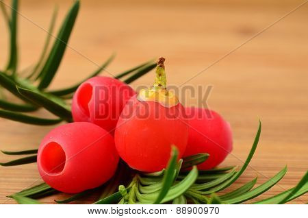 Yew Berries Close Up