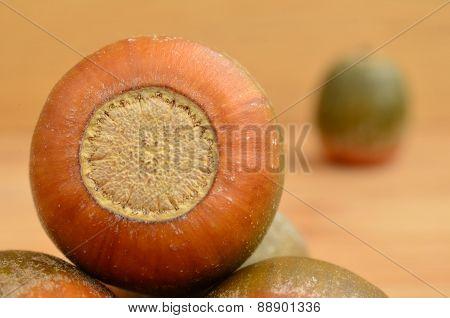Oak Acorn