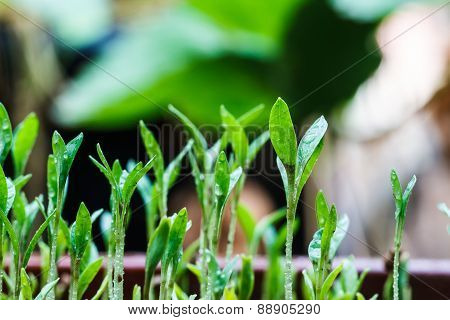 Seeds That Just Regenerate
