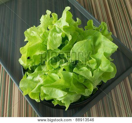Fresh Lettuce Leaves in A Black Bowl