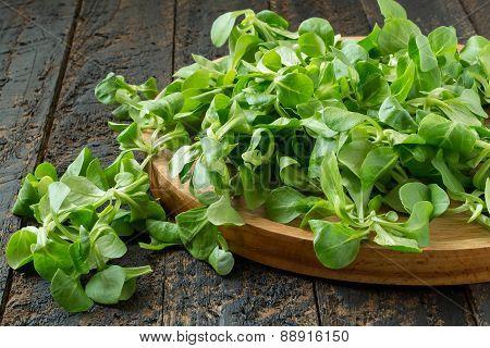 Corn Salad (lamb's Lettuce, Valerianella Locusta)