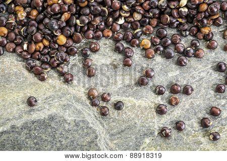 gluten free, black quinoa grain against slate rock - macro background