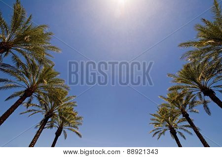 An Image Of The Tops Of Palm Trees And A Blue Sky