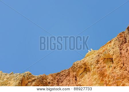 Two seagulls sitting on cliff top