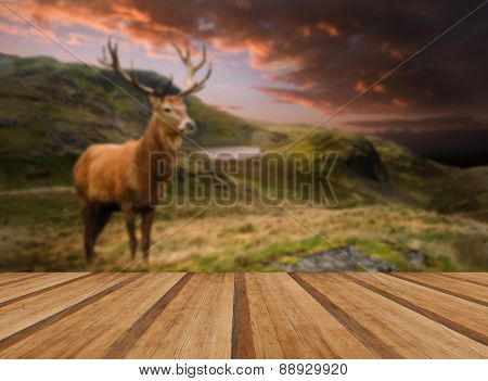 Red Deer Stag In Moody Dramatic Mountain Sunset Landscape With Wooden Planks Floor