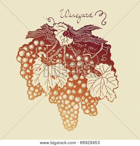 Bunch of grapes with leaves and tendrils, wineyard hand drawing logo, vector