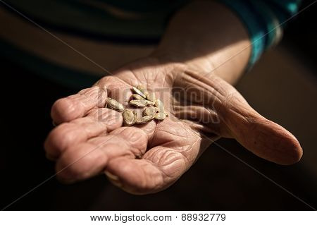 Senior Adults Hand With Seed
