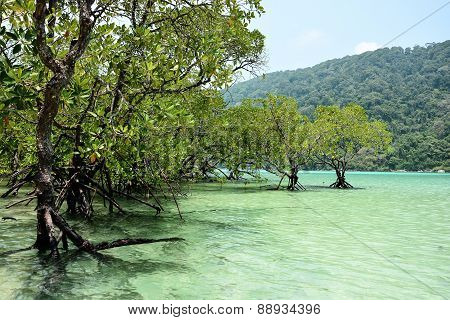 Mangrove Trees In The Tropical Sea