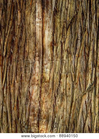 fir tree bark background