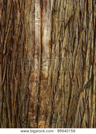 fir tree bark texture
