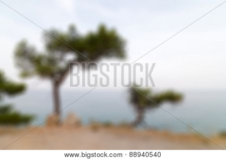 Pine trees on a sea shore