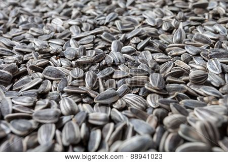 Sunflower seeds background