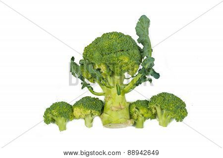 Fresh Green Broccoli Vegetable Isolated On White Background