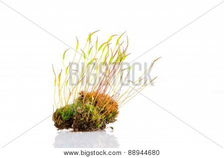 Moss And Reflection
