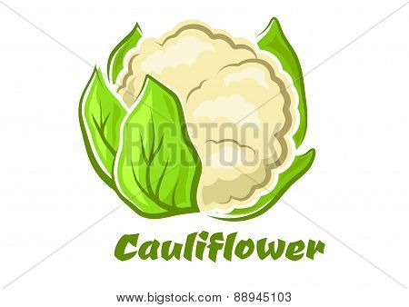 Cartoon cauliflower vegetable with green leaves