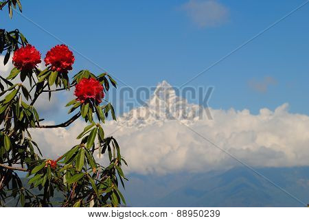 Himalayan mountains and rododendrons
