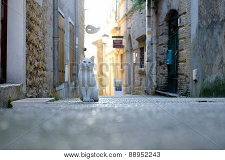 White Cat In The Narrow Streets Of Town