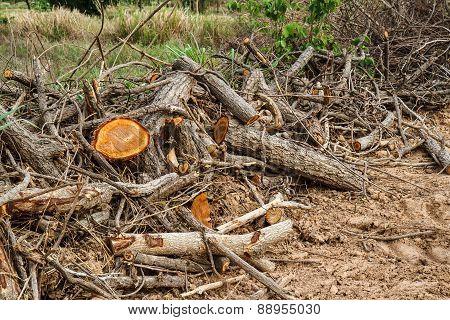 Dry Tree Is Cut Pile.