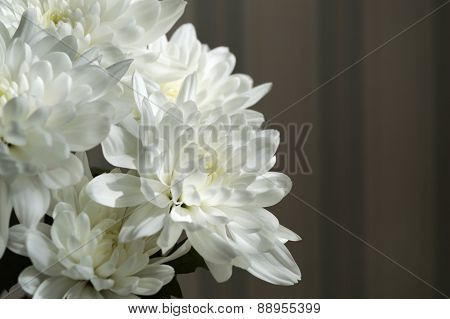 Bunch Of White Asters Against Blurred Striped Wallpapers