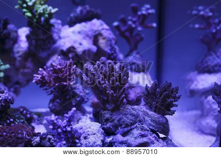 Colorful And Exotic Aquarium