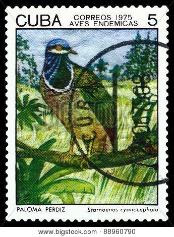 Vintage  Postage Stamp.  Bird Starnoenas Cyanocephala.