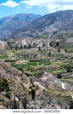 Terrace farming in the canyon of the Colca River in southern Peru