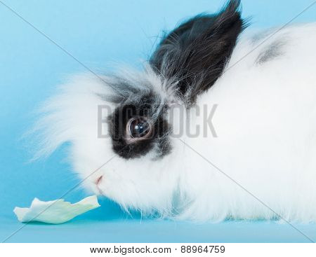 Portrait Of Long-haired Rabbit Decorative Closeup