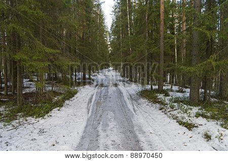 Forest Dirt Road In Early Spring.