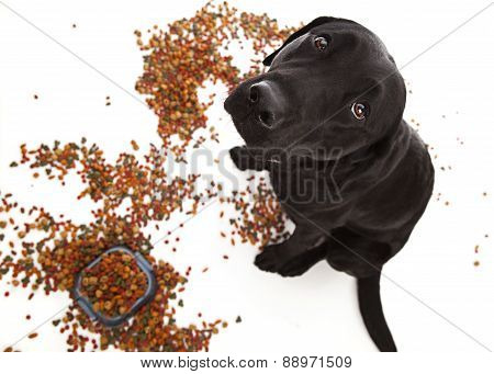 Naught Puppy!