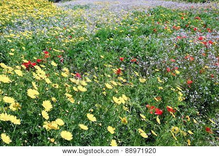 Summer colour flower field