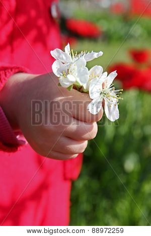 Hand With A Bouquet