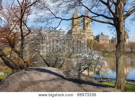 Central Park Lake With Yoshino Cherry Trees In Spring, Nyc