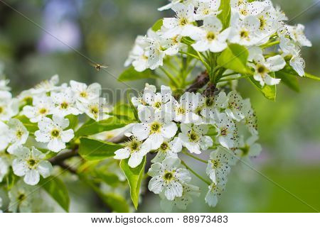 Bee Pollinating Blooming Flowers