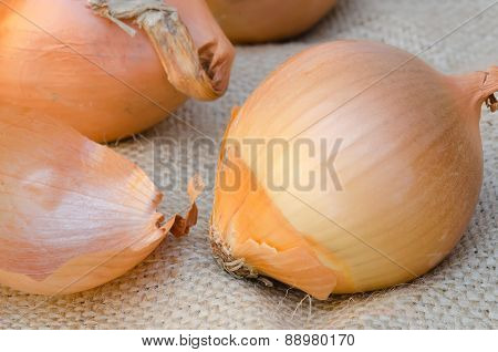 Ripe unpeeled onion on sacking close up
