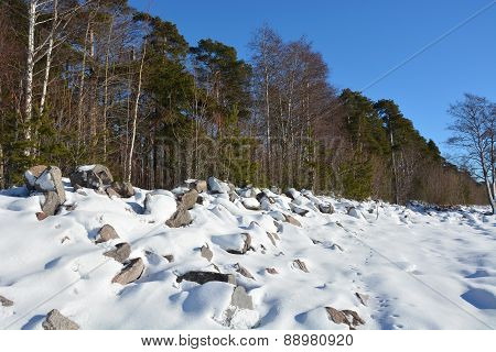 Winter Landscape- Frozen Sea Shore And Line Of Trees