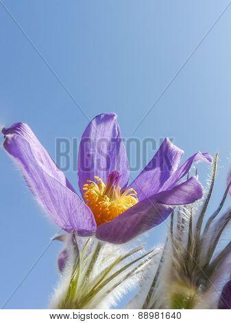 Magnificent Purple Spring Flower