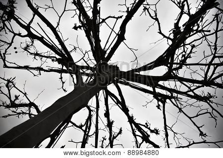 Shilouette Of Strange Tree With Dark Sky