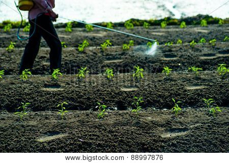 insecticides spraying