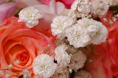 image of rose close up  - Bouquet of beautiful multicolored roses - JPG