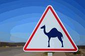 stock photo of camel  - sign camel in Sahara desert in Morocco - JPG