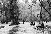 pic of dustbin  - Woman with umbrella walking in Park during heavy snowfall - JPG