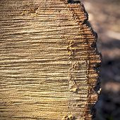 stock photo of lumber  - chopped lumber in the sun with rough shadowy surface looking like a book - JPG