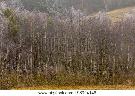 Countryside View Frosty Hilly Fields With Trees