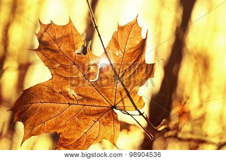dry autumn leaf stuck in tree