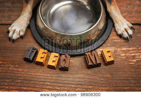 a dog waiting in front of a silver metal bowl for some food to be put in it for dinner time on a stained wooden patio or deck